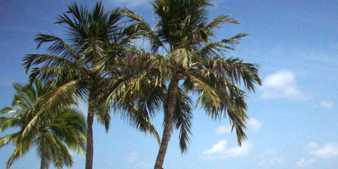 Tropical Islands Karten
